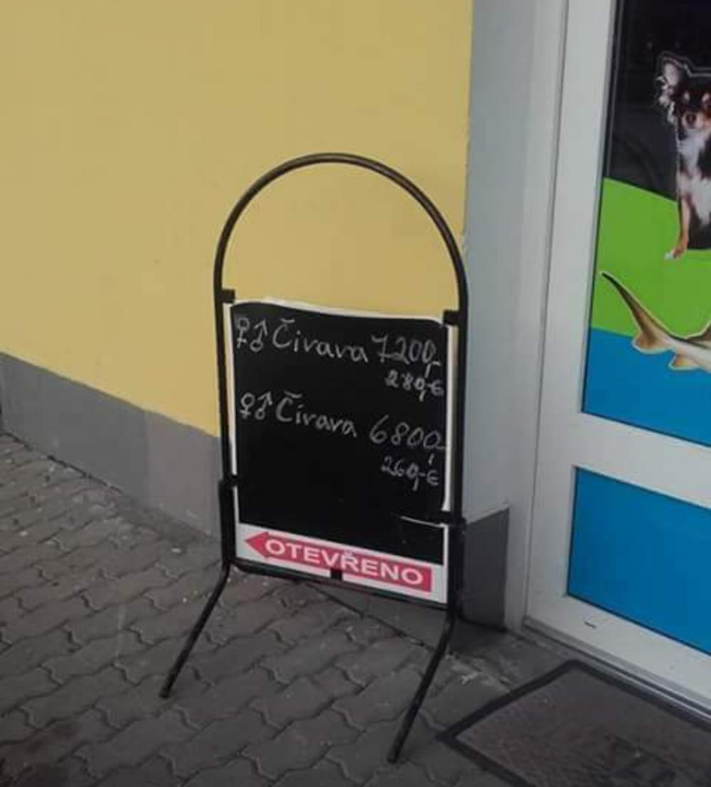 týraní psů v české republice ve zverimexech zoo faktor shop čivava5
