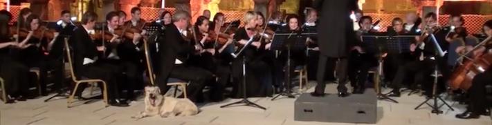 pes narušil vystoupení orchestru koncertu vystoupení