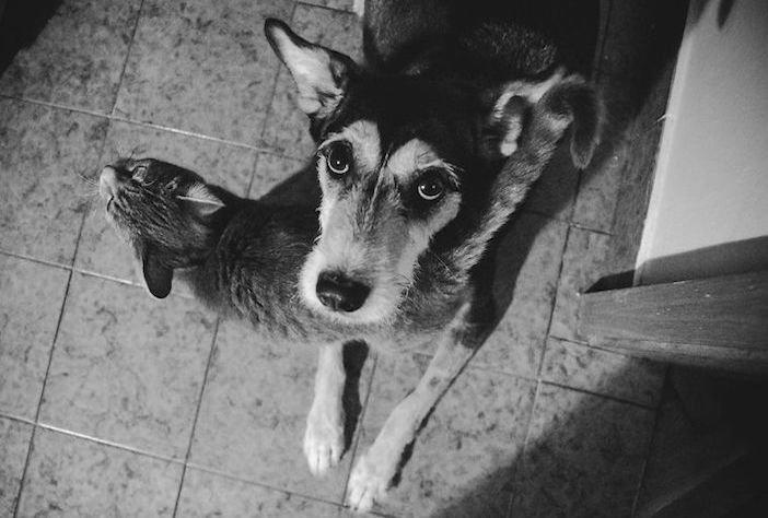 rozloučení se psem těžká vážná nemoc u psa nevyléčitlná nemoc rakovina u psů1a