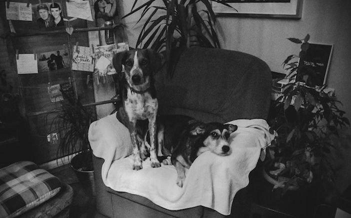 rozloučení se psem těžká vážná nemoc u psa nevyléčitlná nemoc rakovina u psů1b
