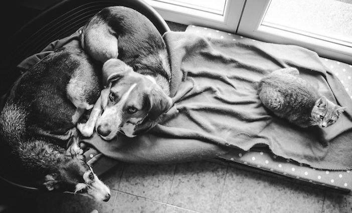 rozloučení se psem těžká vážná nemoc u psa nevyléčitlná nemoc rakovina u psů1c