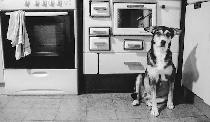rozloučení se psem těžká vážná nemoc u psa nevyléčitlná nemoc rakovina u psů2a