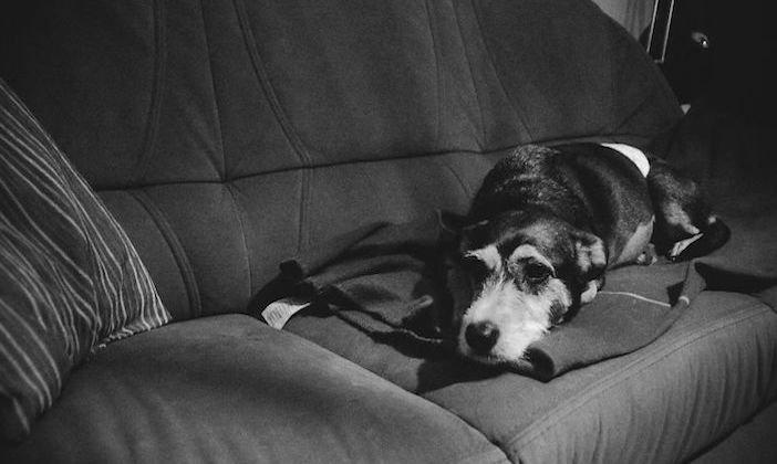 rozloučení se psem těžká vážná nemoc u psa nevyléčitlná nemoc rakovina u psů2b