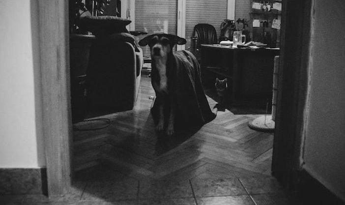 rozloučení se psem těžká vážná nemoc u psa nevyléčitlná nemoc rakovina u psů2c