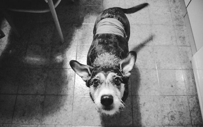 rozloučení se psem těžká vážná nemoc u psa nevyléčitlná nemoc rakovina u psů3
