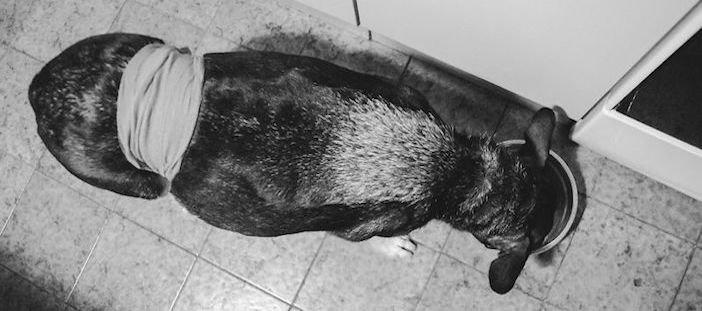 rozloučení se psem těžká vážná nemoc u psa nevyléčitlná nemoc rakovina u psů3a