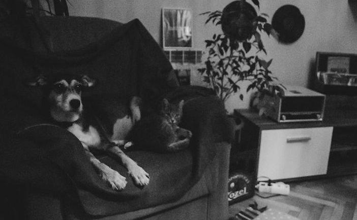 rozloučení se psem těžká vážná nemoc u psa nevyléčitlná nemoc rakovina u psů3b