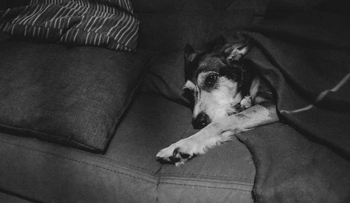 rozloučení se psem těžká vážná nemoc u psa nevyléčitlná nemoc rakovina u psů3c