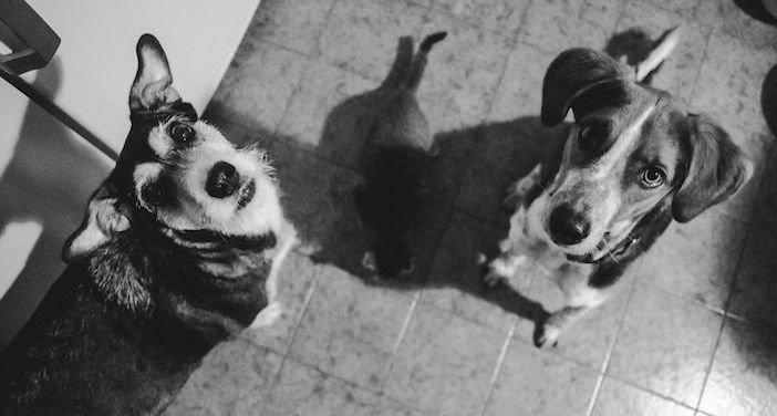 rozloučení se psem těžká vážná nemoc u psa nevyléčitlná nemoc rakovina u psů3d