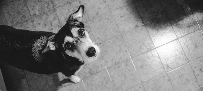 rozloučení se psem těžká vážná nemoc u psa nevyléčitlná nemoc rakovina u psů3e