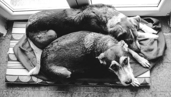 rozloučení se psem těžká vážná nemoc u psa nevyléčitlná nemoc rakovina u psů3f