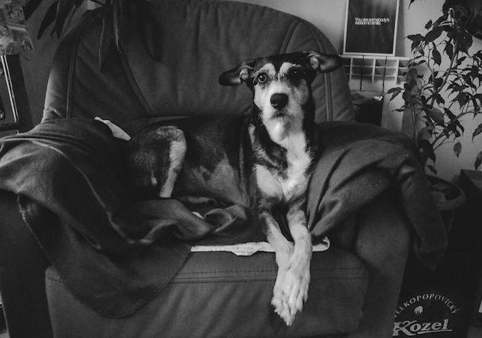 rozloučení se psem těžká vážná nemoc u psa nevyléčitlná nemoc rakovina u psů4