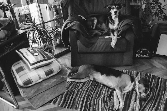 rozloučení se psem těžká vážná nemoc u psa nevyléčitlná nemoc rakovina u psů4a