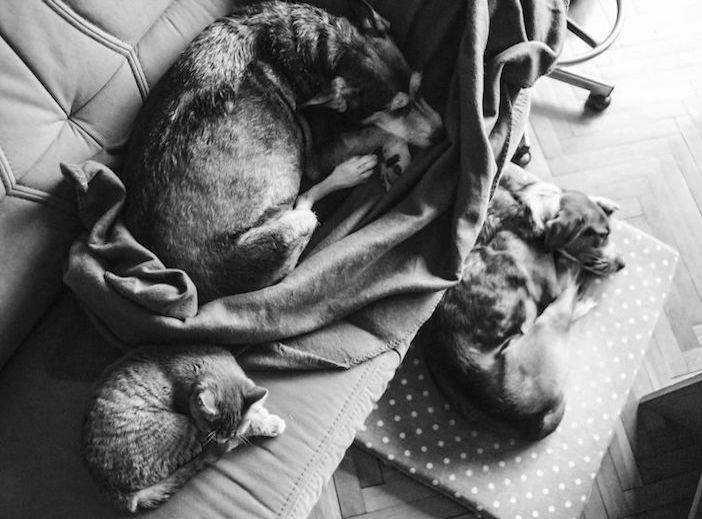 rozloučení se psem těžká vážná nemoc u psa nevyléčitlná nemoc rakovina u psů4e
