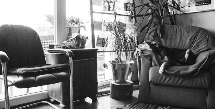 rozloučení se psem těžká vážná nemoc u psa nevyléčitlná nemoc rakovina u psů5