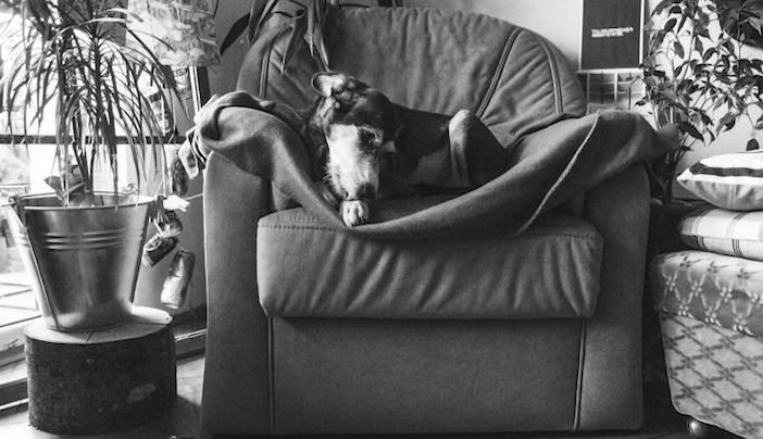 rozloučení se psem těžká vážná nemoc u psa nevyléčitlná nemoc rakovina u psů5a