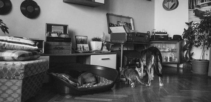 rozloučení se psem těžká vážná nemoc u psa nevyléčitlná nemoc rakovina u psů5b