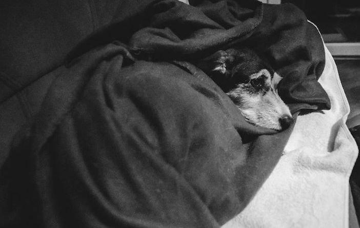 rozloučení se psem těžká vážná nemoc u psa nevyléčitlná nemoc rakovina u psů5c