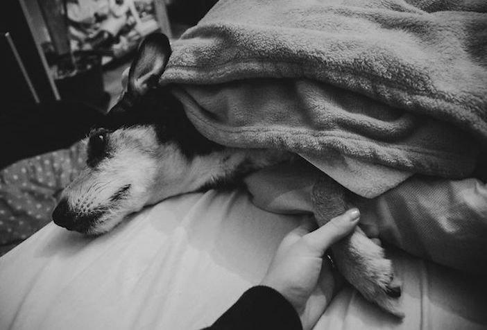 rozloučení se psem těžká vážná nemoc u psa nevyléčitlná nemoc rakovina u psů6a