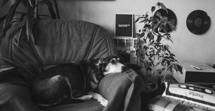 rozloučení se psem těžká vážná nemoc u psa nevyléčitlná nemoc rakovina u psů7
