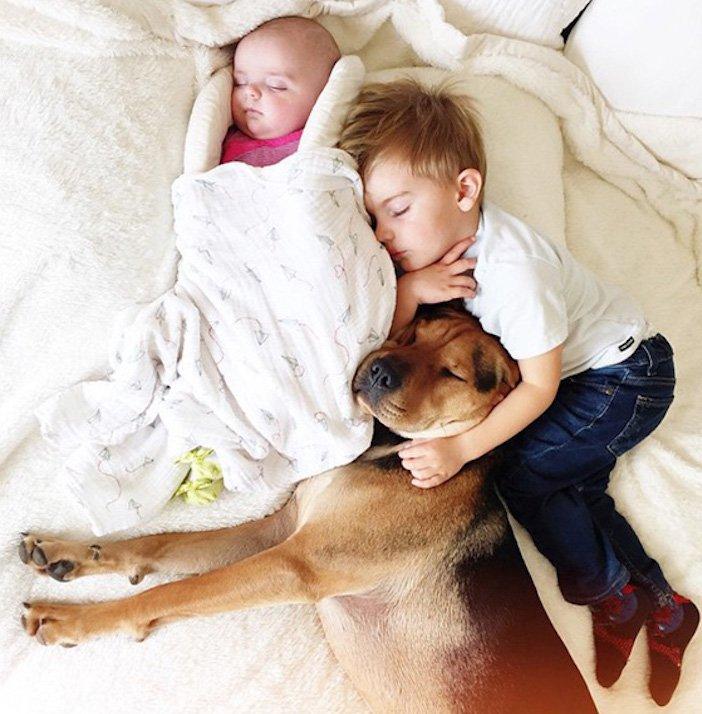 děti a psi dítě a pes nejlepší obrázky dětí a psů fotografie fotoalbum obrázek_6