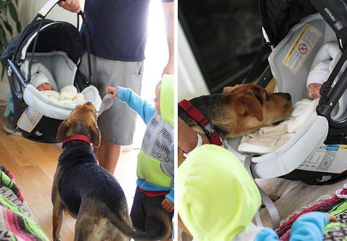 děti a psi dítě a pes nejlepší obrázky dětí a psů fotografie fotoalbum obrázek_12