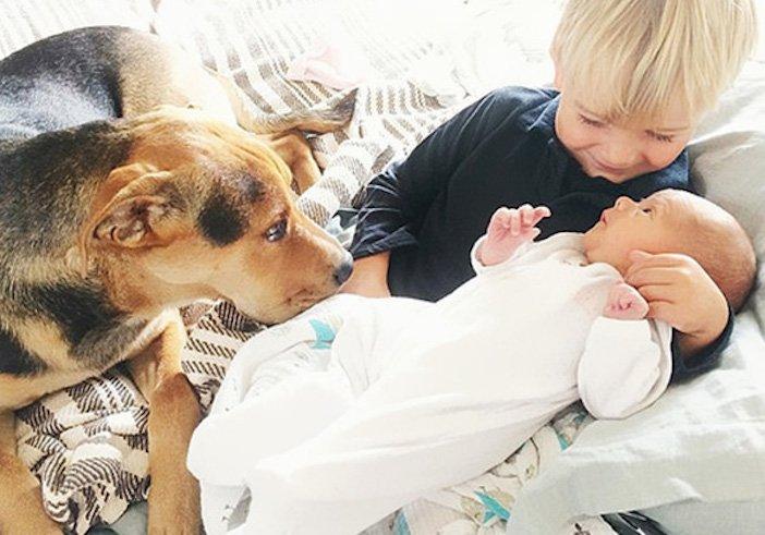 děti a psi dítě a pes nejlepší obrázky dětí a psů fotografie fotoalbum obrázek_13