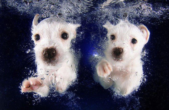 štěňata štěňě ve vodě voda koupání nejlepší obrázky fotografie psů_1
