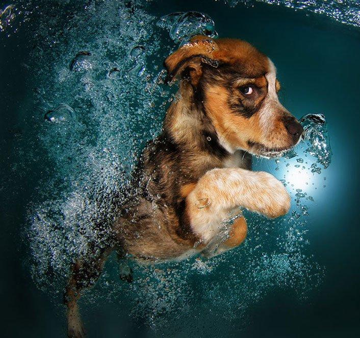 štěňata štěňě ve vodě voda koupání nejlepší obrázky fotografie psů_3