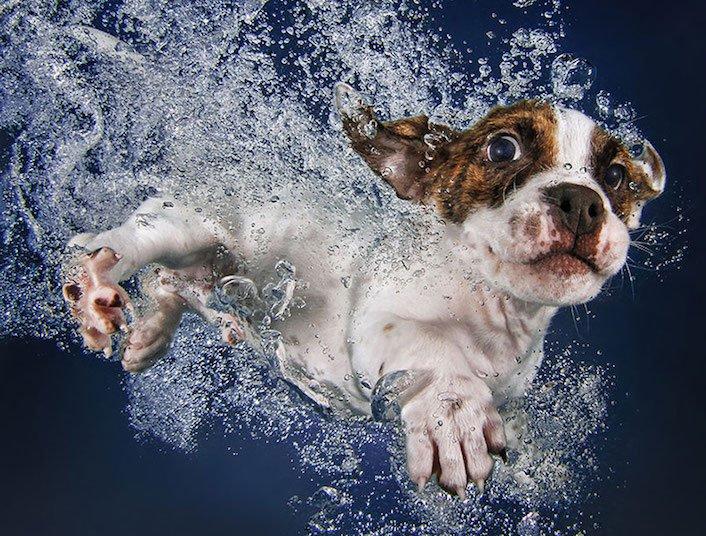 štěňata štěňě ve vodě voda koupání nejlepší obrázky fotografie psů_5