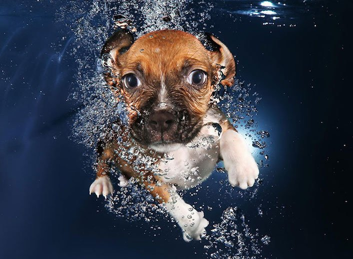 štěňata štěňě ve vodě voda koupání nejlepší obrázky fotografie psů_9