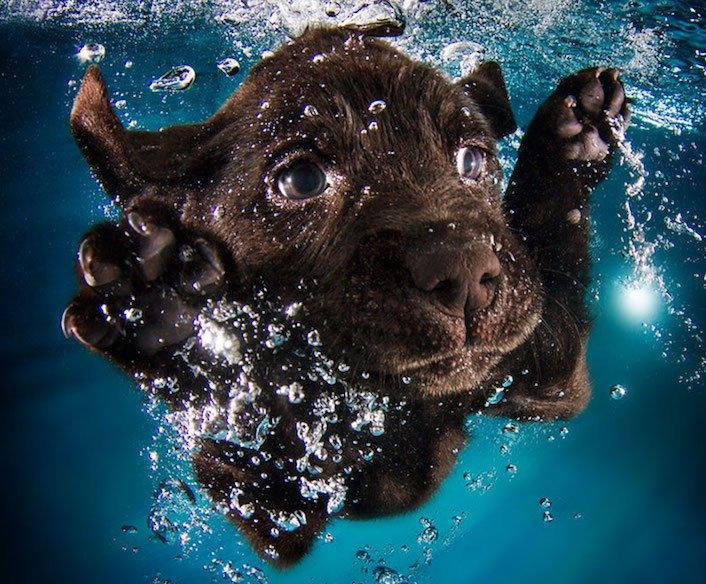 štěňata štěňě ve vodě voda koupání nejlepší obrázky fotografie psů_10