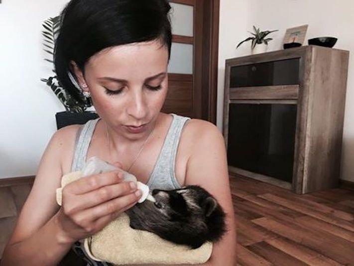 mládě mývala mýval mývalčata mývalče pes se psem v české republice čr adopce chov chování_7