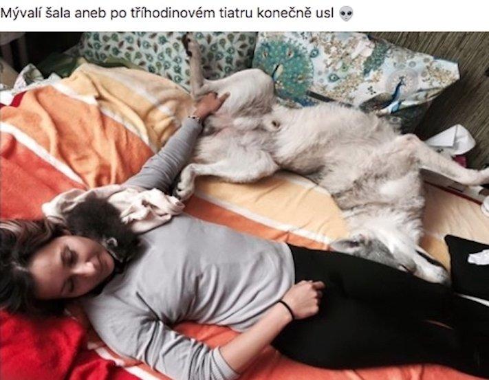 mládě mývala mýval mývalčata mývalče pes se psem v české republice čr adopce chov chování_3