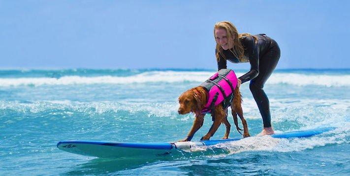 pes surfuje v moři na vodě surf surfující pes na prkně asistenční služební psi pomoc postiženým lidem s handicapem 2