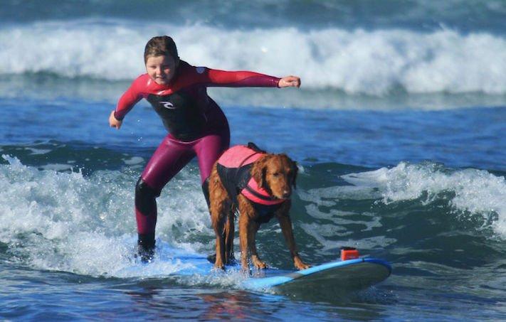 pes surfuje v moři na vodě surf surfující pes na prkně asistenční služební psi pomoc postiženým lidem s handicapem 3