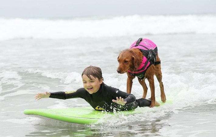 pes surfuje v moři na vodě surf surfující pes na prkně asistenční služební psi pomoc postiženým lidem s handicapem 4
