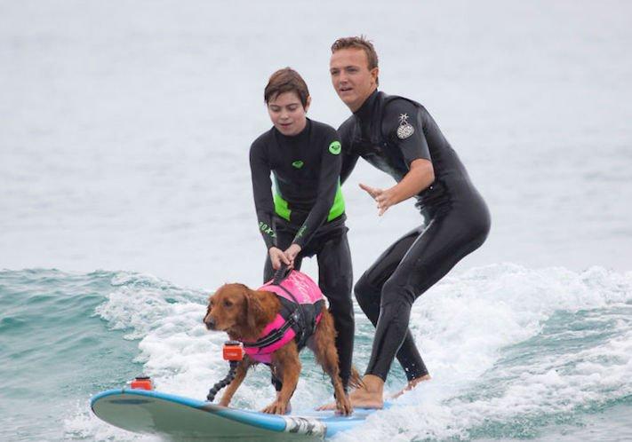 pes surfuje v moři na vodě surf surfující pes na prkně asistenční služební psi pomoc postiženým lidem s handicapem 10