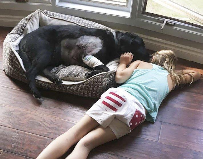 dítě a pes s dítětem novorozeně novorozenec příběh soužití nejlepší přátelství přítel 10