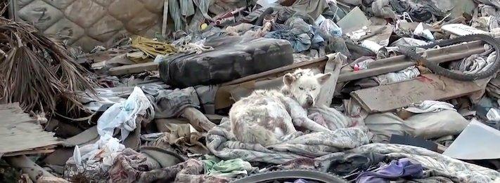 záchrana psa ze skládky pomoc psům na ulici psi bez domova 1