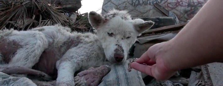 záchrana psa ze skládky pomoc psům na ulici psi bez domova 2