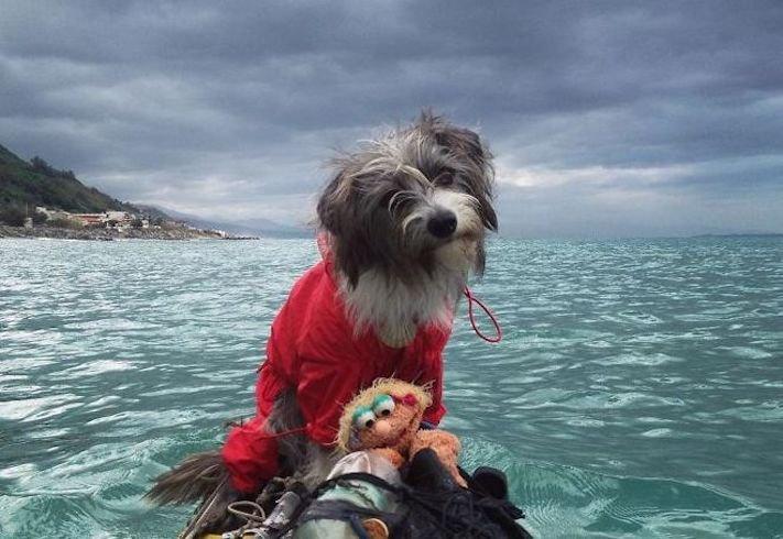 se psem k moři na vodu na kajaku v lodi člunu na vodě 2