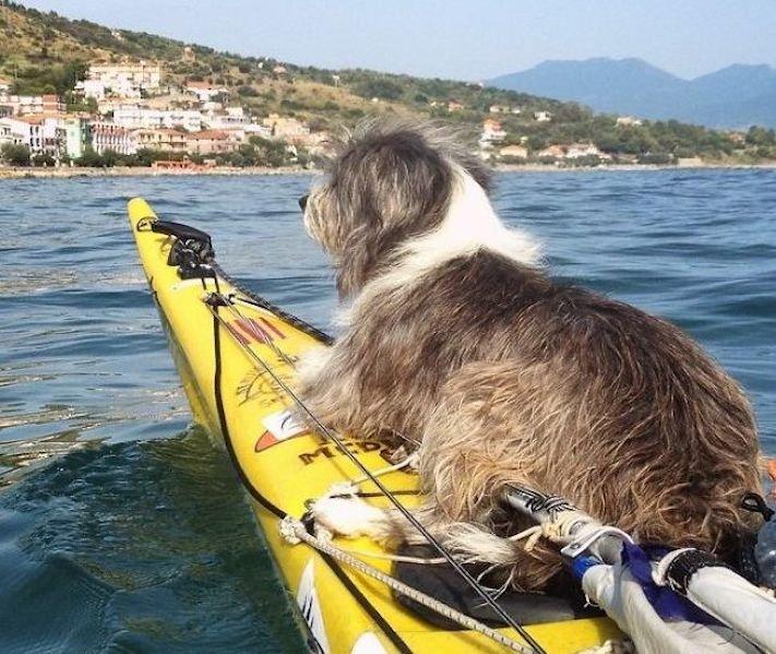 se psem k moři na vodu na kajaku v lodi člunu na vodě 4
