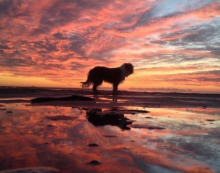 se psem k moři na vodu na kajaku v lodi člunu na vodě 5