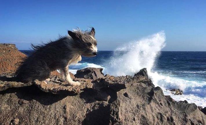 se psem k moři na vodu na kajaku v lodi člunu na vodě 7