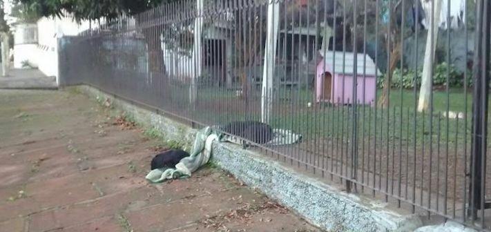 fena pes se dělí o své věci deku z útulku ulice do nového domova adopce psů 3