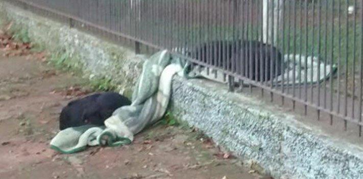 fena pes se dělí o své věci deku z útulku ulice do nového domova adopce psů 4