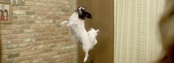 zakázané nejlepší reklamy se psy 2