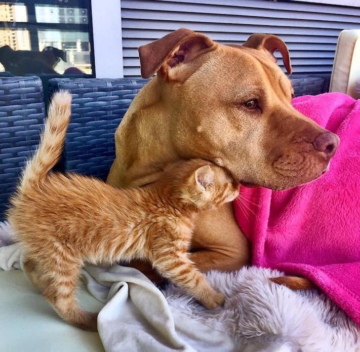 pes z útulku záchrana psa pomoc psům pitbul a kotě pes s kočkou příběhy se psy 1