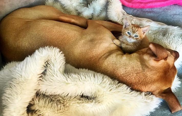 pes z útulku záchrana psa pomoc psům pitbul a kotě pes s kočkou příběhy se psy 6a